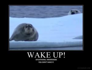 si-seal-bear